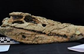 ep craneococodrilo barrosasuchus neuquenianus