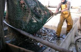 ep el pp pide al gobierno negociar con las flotas las restricciones a la pesca de arrastre en el