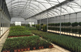 ep plantas de vivero