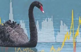 cbblack swan sh111