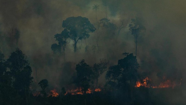 ep fuegos en la selva del amazonas