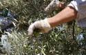 ep notaprensala consejeriaagricultura pescadesarrollo rural verdeo