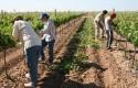 ep agricultores trabajandocampo