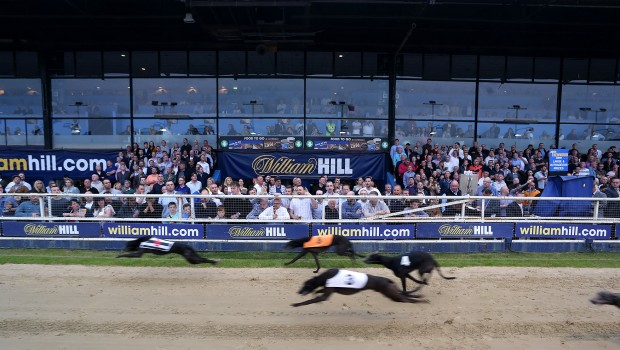 william hill dog racing greyhound